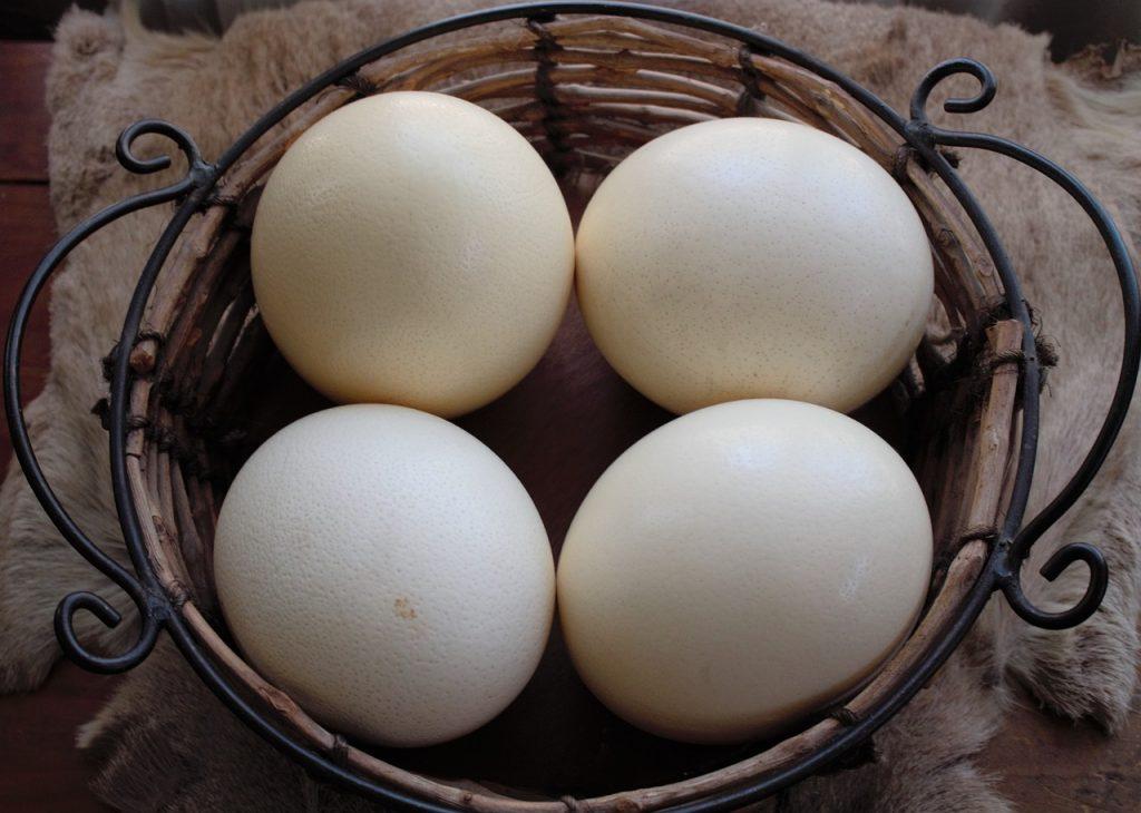 œuf d'autruche prix
